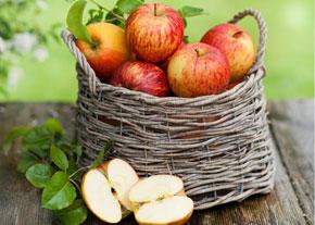 äpfel Zu äpfel